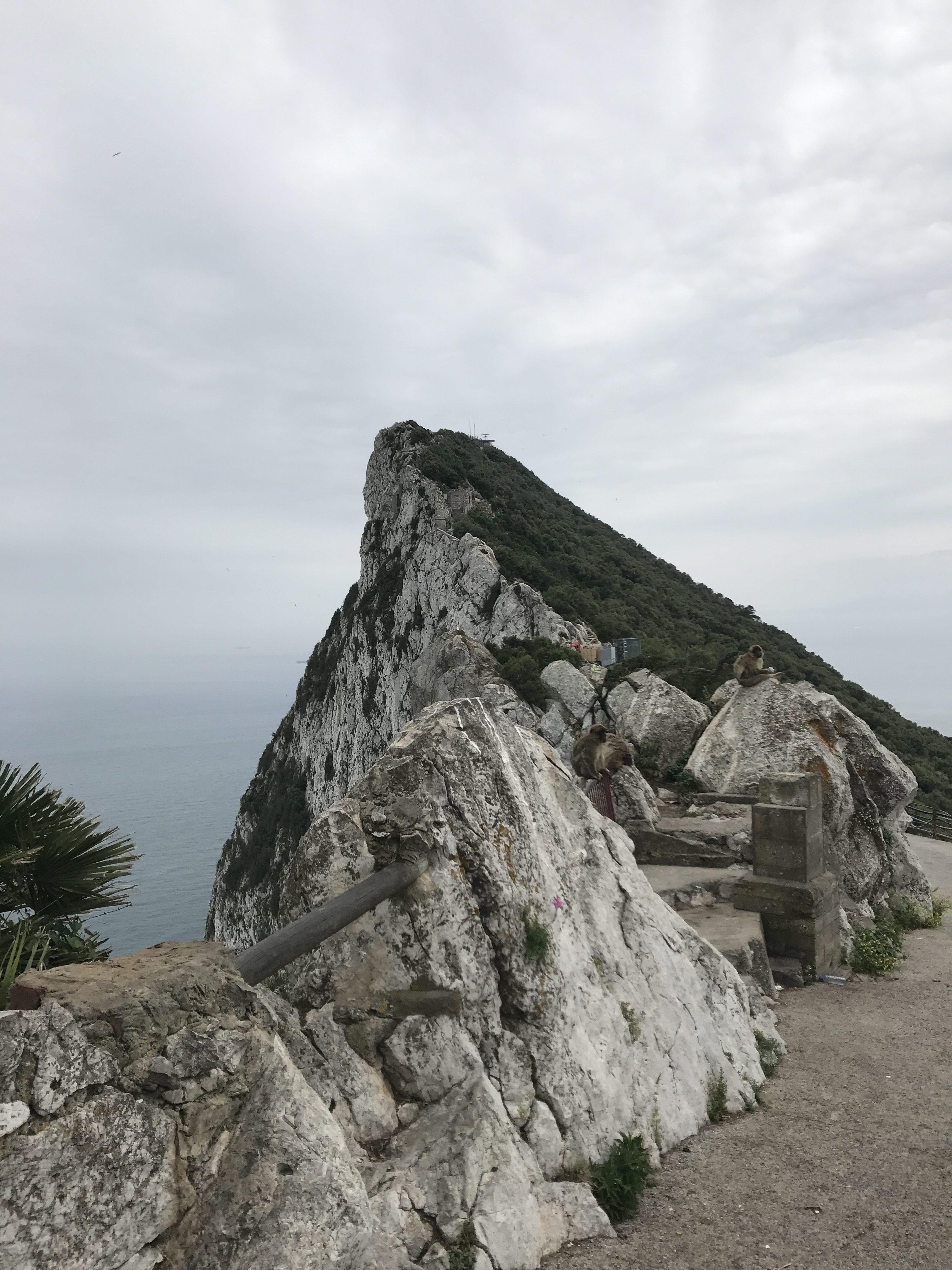 Gibraltar a volně žijící makakové